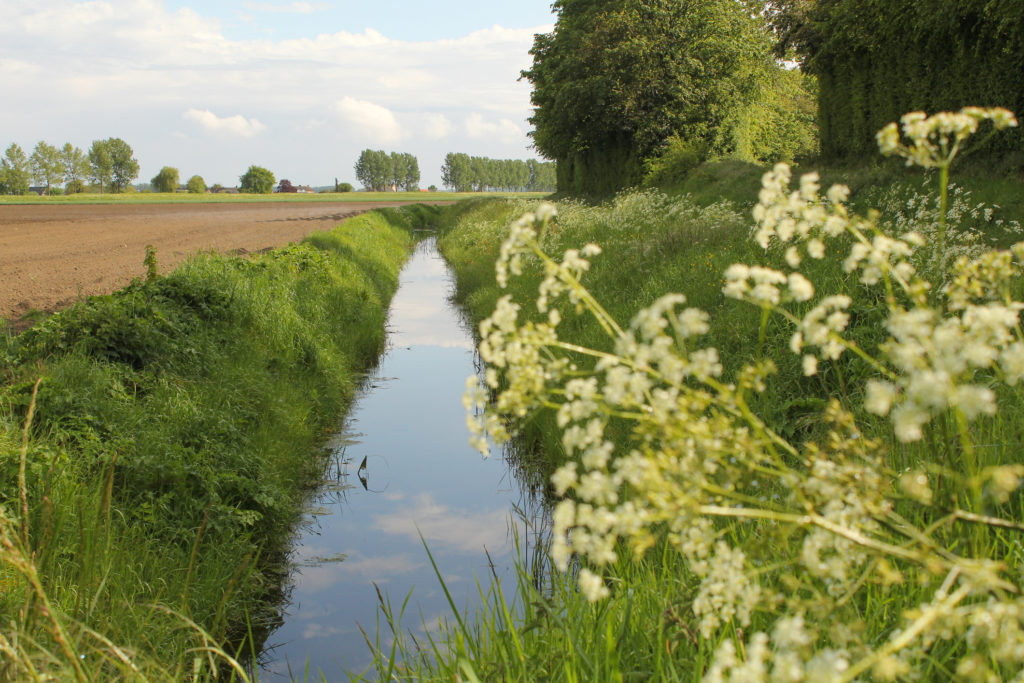 A drainage ditch along an agricultural field